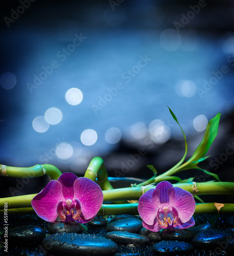 Background with  orchids stone and bamboo - sea