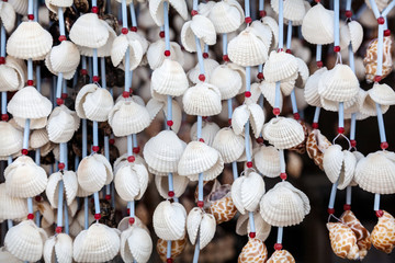 Seashell decorations