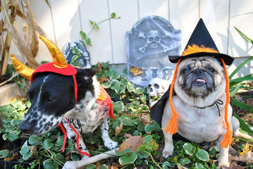 2 Dogs in Costume for Halloween