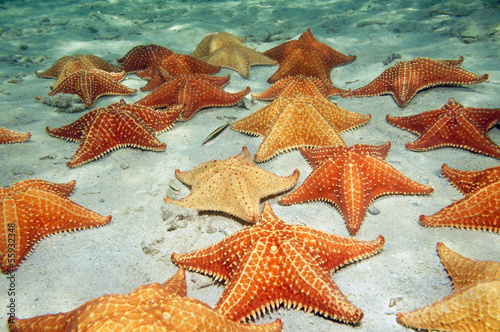 Fotobehang Koraalriffen Sea stars on sandy ocean floor