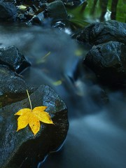 Colorful leaves, autumn colors in mountain stream.