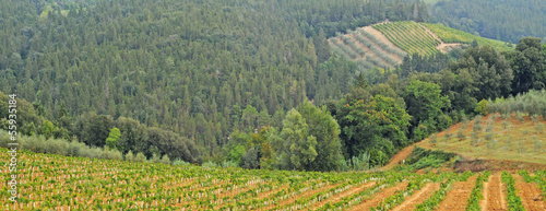 Landscape in Tuscany with vineyards and olive fields