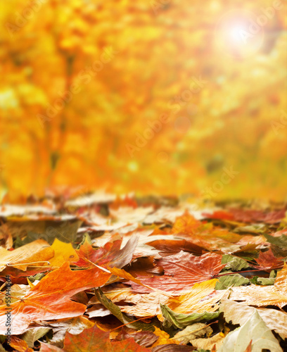 Beautiful sunny autumn background with fallen leaves