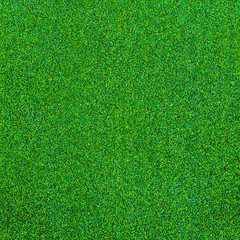 Green grass texture for background