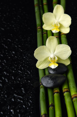 orchid with stones and bamboo grove on wet background