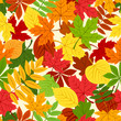 Seamless pattern with colorful autumn leaves. Vector.