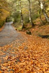 carretera en otoño 2