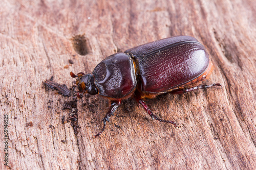 close up Coleoptera