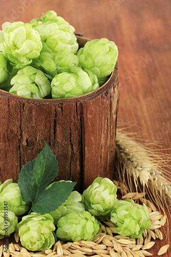 Fresh green hops and barley, on wooden background