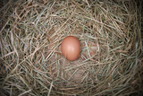 Brown Chicken Egg In Nesting Box