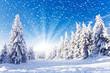 Leinwandbild Motiv Winter-Wunder-Land