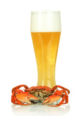 Boiled crab and beer, isolated on white