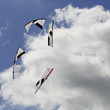 Stunt kites in circle formation