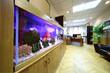 Light office with desktop, armchair and big aquarium