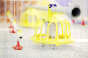 Demonstration of plastic chicken feeders in industrial incubator