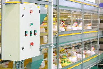 Demonstration of multilevel industrial incubator with soft toy