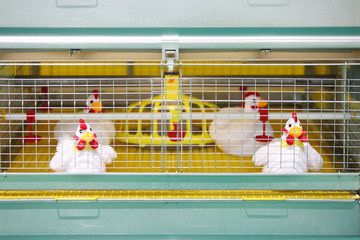 Demonstration of chicken industrial incubator with soft toy