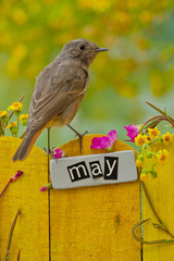 Bird perched on a May decorated fence