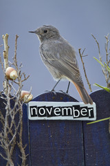 Bird perched on a November decorated fence