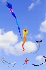 Serpent  and Japanese kites