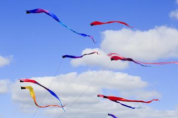 Serpent  kites