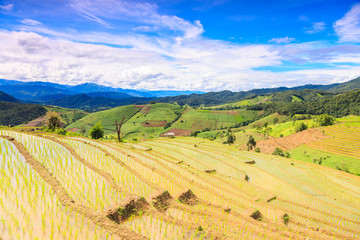 blue sky with rice terrace at chiangmai thailand