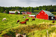 old farm and red cottages in rural country-side, grazing cattle
