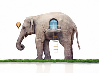 elephant as a house