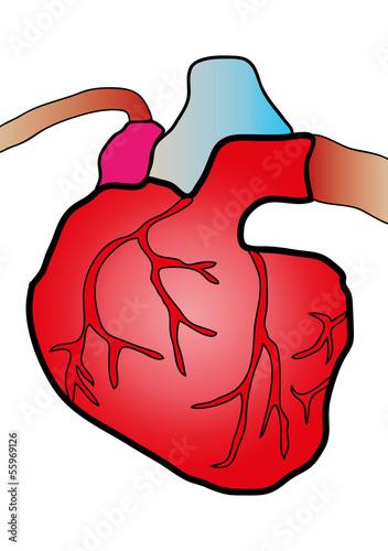 système cardiaque