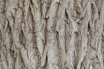 Brown  tree bark close up