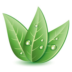 vector symbol of green leaves