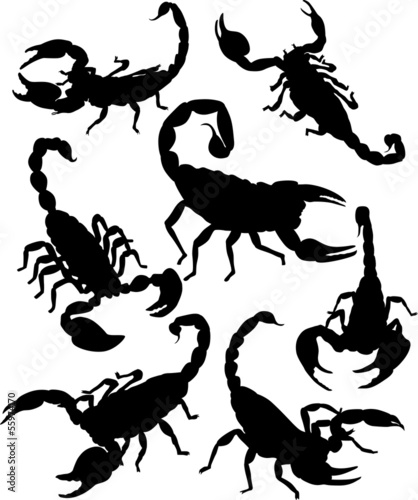 Vector scorpion silhouette