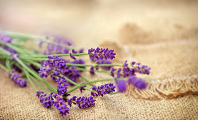 Selective focus on lavender