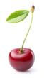 One sweet cherry