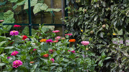 Greenhouse, flowers and vegetables in thegarden