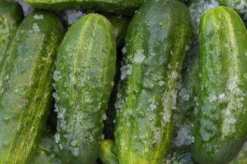 Pickle in salt for conserving