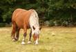 cheval à crinière blonde