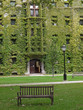 ivy covered gothic style college building