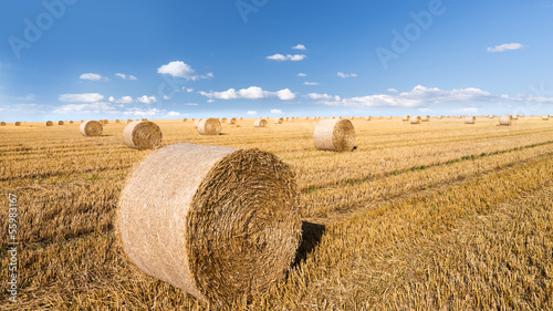 straw bales in august