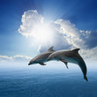Dolphins jumping - 55983542