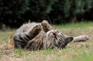 Katze in Rückenlage