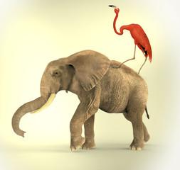 Flamenco encima de Elefante