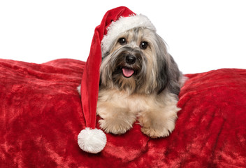 Funny Christmas dog with a Santa hat is lying on a red blanket