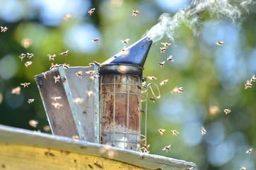 dymiący podkurzacz pszczeli stojący na ulu