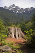 Overlook at Cut Tree Stump North Cascade Mountains Washington