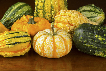 Fall Squash or Gourds Closeup