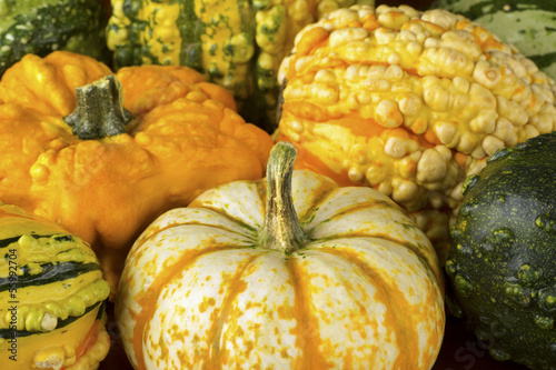 Fall Squash or Gourds in Closup