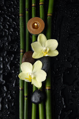 orchid with stones and bamboo grove and candle on wet