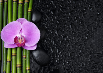 orchid and black stones and thin bamboo grove on wet background