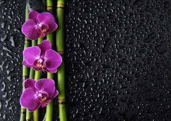 orchid and black stones and thin bamboo grove on wet